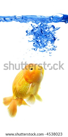 A shot of a goldfish in a fish tank with abstract blue bubbles - stock photo