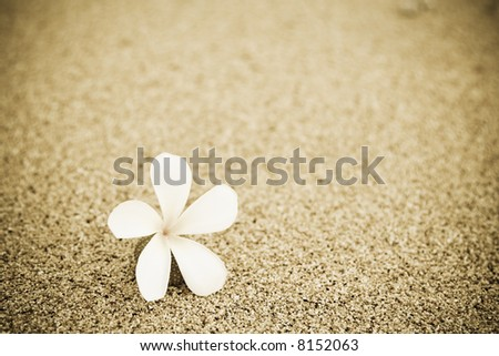 A shot of a single flower on the beach - stock photo