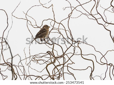 A shot of a sparrow sitting in a tree. - stock photo