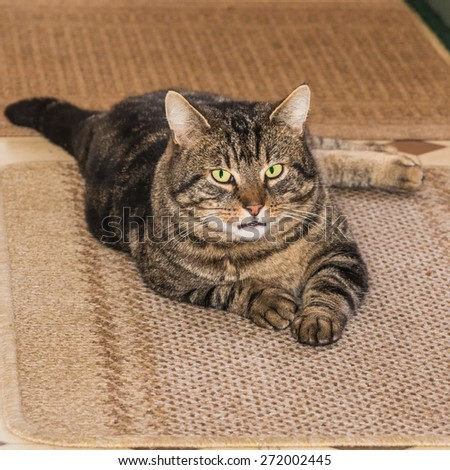 A shot of a tabby cat lying on a mat. - stock photo