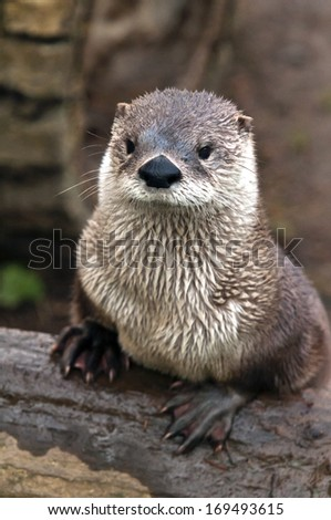 A shot of an otter on a bank