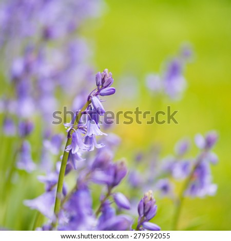 A shot of some bluebells. - stock photo