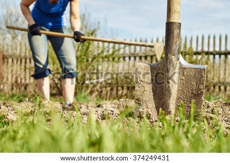 A shovel stuck in the ground against a woman digging the earth to plant potatoes