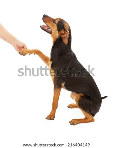 A side view of a happy mixed breed dog sitting and and looking up while shaking the hand of a person - stock photo