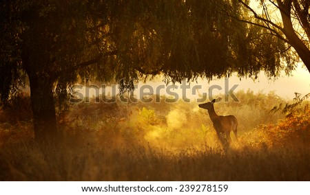 A silhouette of a deer standing user a willow tree  - stock photo