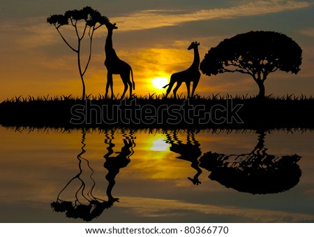 A silhouette of a giraffe at sunset - stock photo