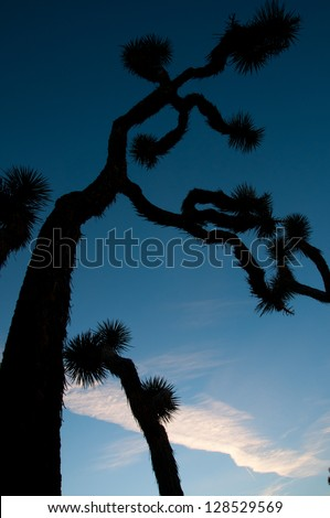 A silhouette of a joshua tree in Joshua Tree National Park. - stock photo