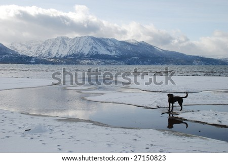 A silhouette of a labrador dog in front of Jake's Peak on Lake Tahoe.