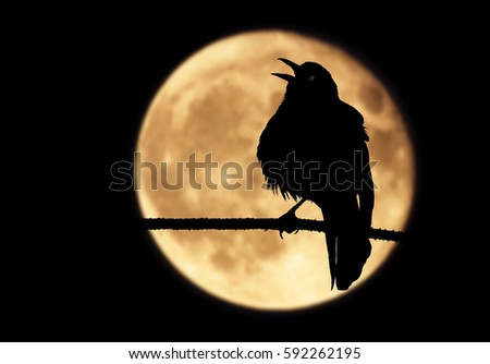 A silhouette of a raven perched on a branch with its beak wide open. The bird, framed by a full moon, shrieks into the moonlit night while emitting a mysterious red glow from its eye.