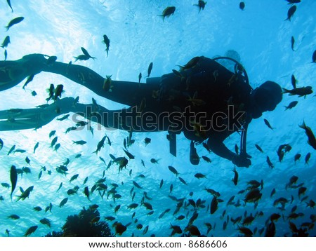 A silhouette of a scuba diver with lots of fish around him - stock photo
