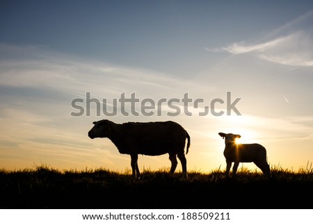 a silhouette of a sheep and a lamb
