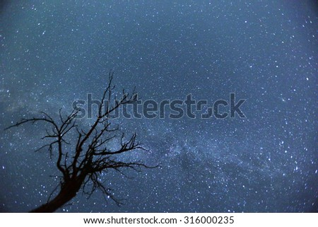 A silhouette of a tree in front of the Milky way at August. - stock photo