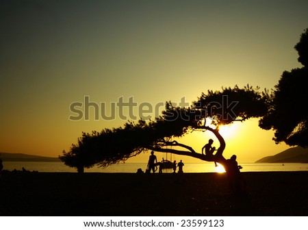 A silhouette of a tree in the sunset