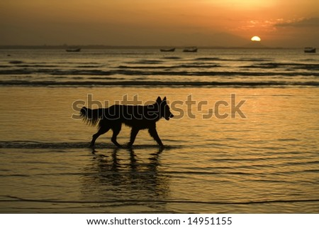 A silhouette of dog in the water.