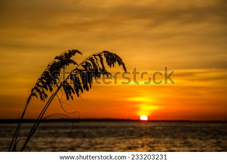 A silhouette of grass with the sun setting in the background - stock photo