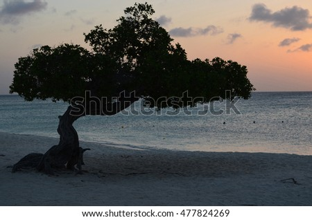 A silhouetted divi divi tree at sunset on Eagle Beach.