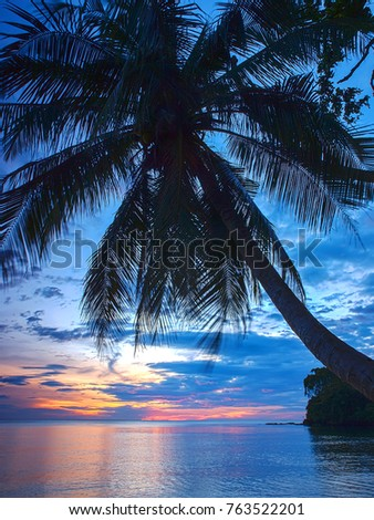 A silhouetted palm tree covers the sky at sunset at a local beauty spot near the ocean, Thailand