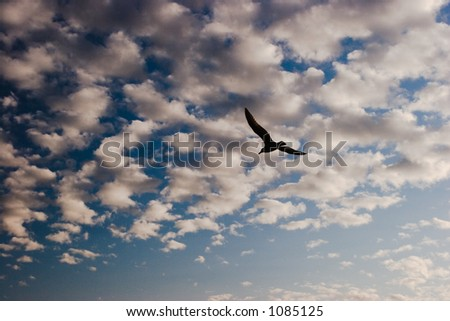 A silhouetted seagull flies off into a dramatic sky