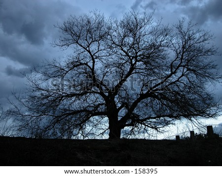 A silhouetted tree - stock photo