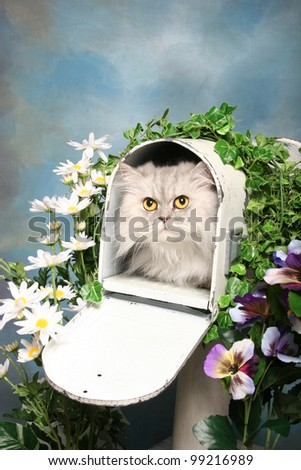 A silky himalayan cat lays inside an open mailbox surrounded by flowers - stock photo