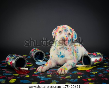 A silly Lab puppy looking like he just got caught getting into paint cans and making a colorful mess. - stock photo