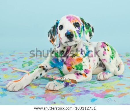 A silly little Dalmatian puppy that looks like he got into the art supplies, on a blue background. - stock photo
