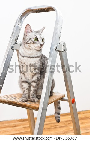 A silver tiger (tabby) cat relaxing on the top of the small home aluminum ladder - stock photo