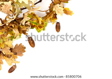 A simple border made up of autumnal oak leaves and acorns.