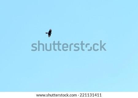 A single bird flying The blue sky - stock photo