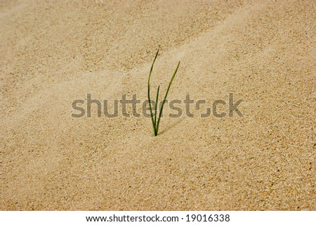 A single blade of grass