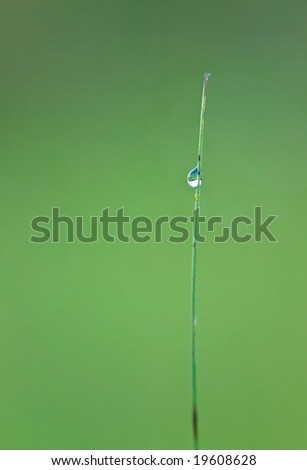 A single blade of grass with a sparkling drop of rain or dew against a green background taken with selective focus.