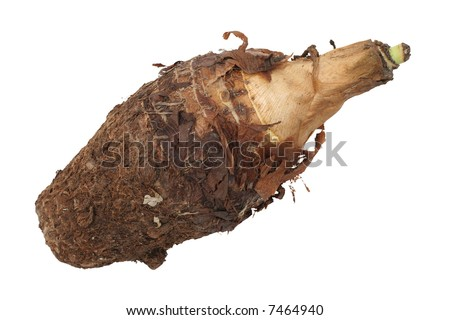 A single brown yam root isolated on white - stock photo