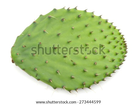 A single cactus vegetable leaf isolated - stock photo