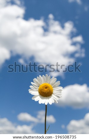 A single daisy under a blue sky with puffy white clouds.