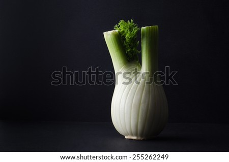 A single fennel bulb, with leaves, on a black surface with black background.  Dark; moody lighting.  - stock photo