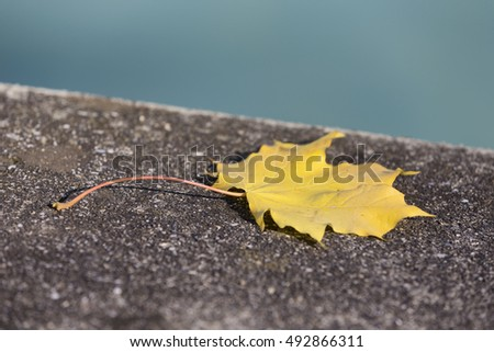 A single golden leaf laying on concrete by the riverside with the blue water in the background.