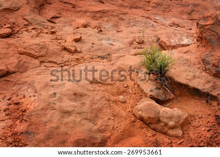 A single green plant in the hot desert sand heat - stock photo
