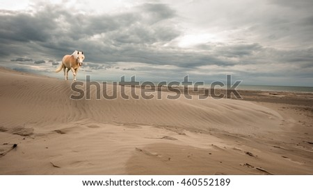 A single horse walking on the beach