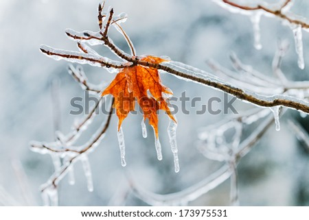 a single leaf on an icy day in winter - stock photo