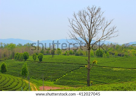 A single lonely bare tree in the field around with the green fresh area concept of contrasting - stock photo