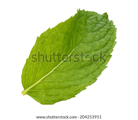 A single mint leaf isolated white