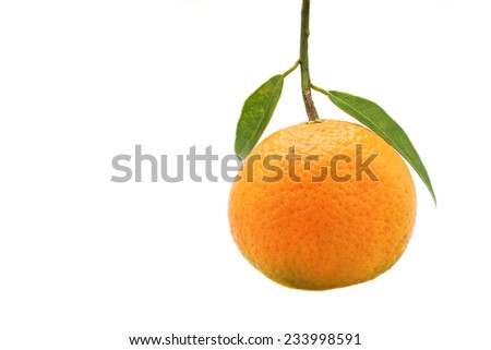 A single orange fruit with leaf. The focus is placed on the leaves. - stock photo
