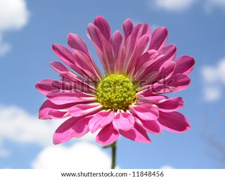 A single pink flower against blue sky - stock photo