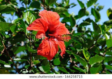 A single red flower - stock photo