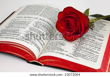 "A single red rose rests upon the pages of an old bible open to the romantic chapter, "" Song of Solomon"", on a white background. - stock photo"