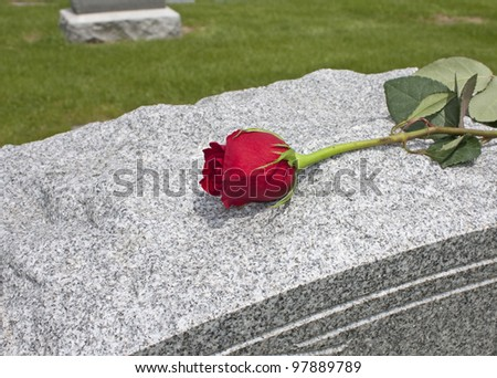 A single rose placed on a grave - stock photo