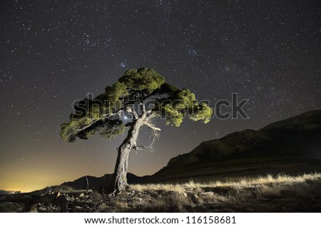 A single tree in a natural park under the stars - stock photo