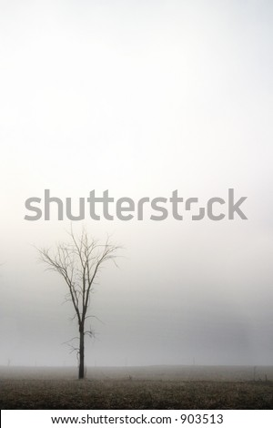 A single tree in the fog. contains noise at full size - stock photo