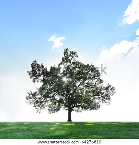 A single tree on a green grass field with blue sky and copyspace above.