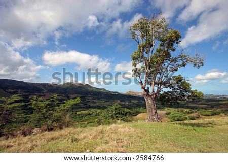A single tree overlooking a sweeping mountain vista